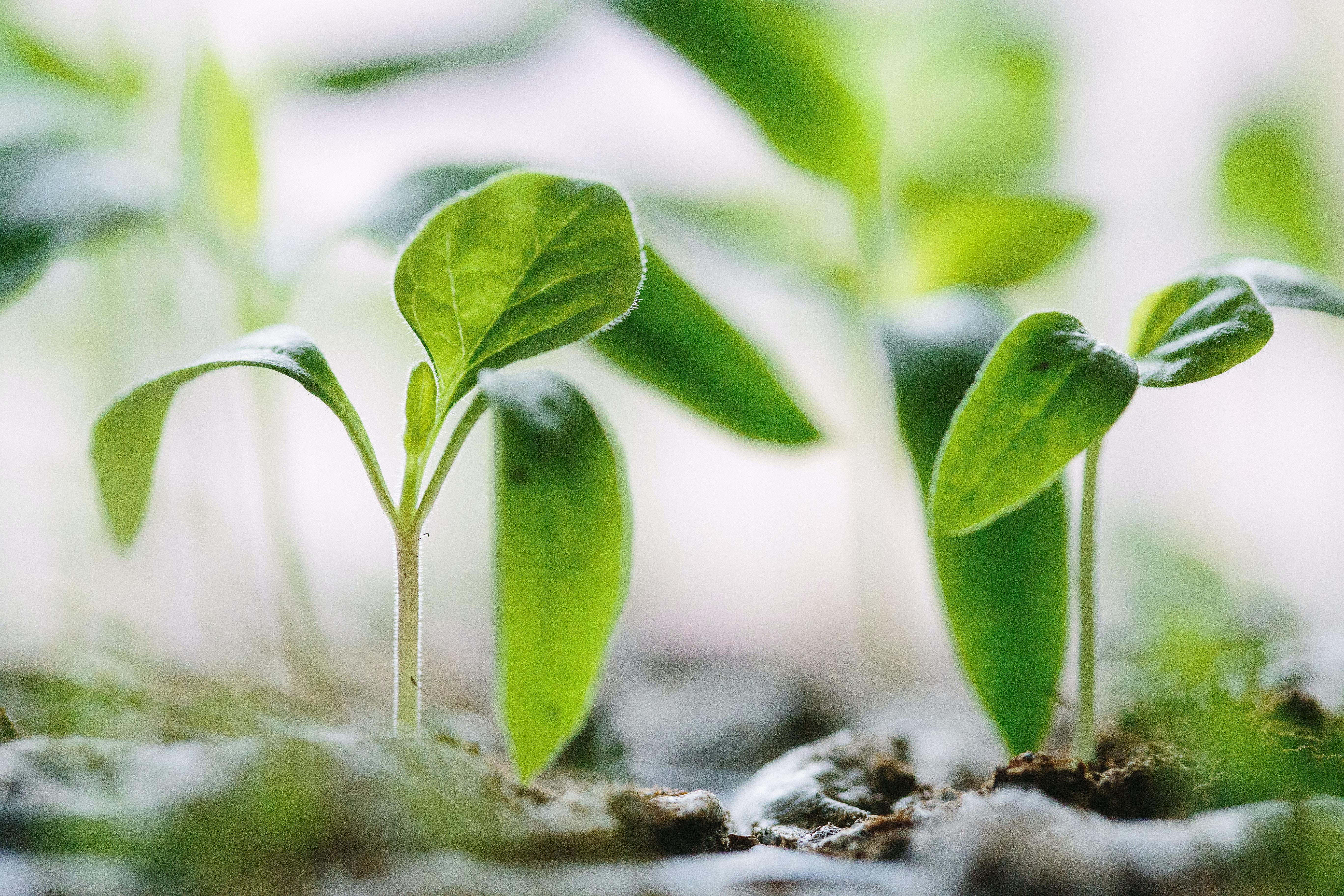 Pamatapmācība augu aizsardzības līdzekļu lietotājiem