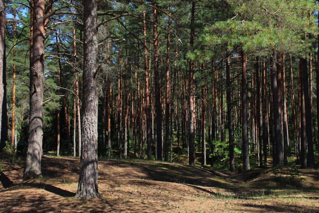 Augošu koku krājas noteikšana