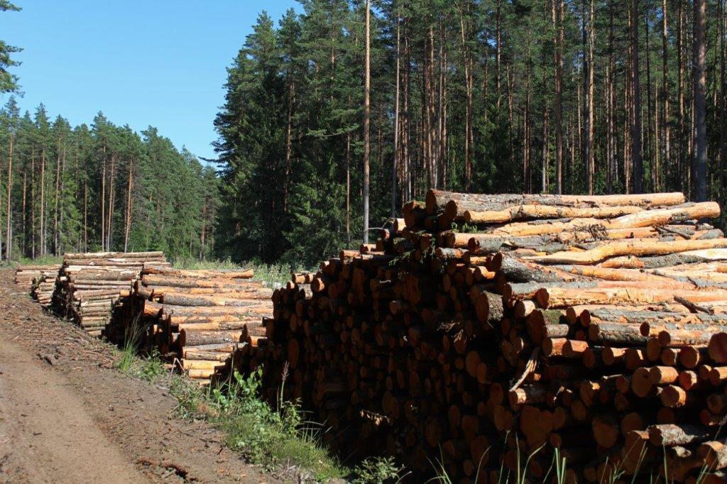 Nodokļi meža apsaimniekošanā