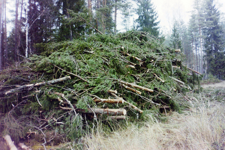 Training program for entrepreneurs related  to forestry