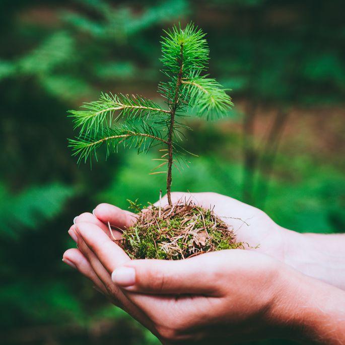 Mežsaimniecības kooperatīvu darbības dažādošana un konkurētspējas palielināšana